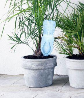 La-bottiglia-d-acqua-rovesciata-per-le-piante_su_vertical_dyn